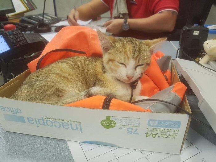 Отважный котенок сам вернулся на поезде домой кот, поезд, возвращение домой, длиннопост