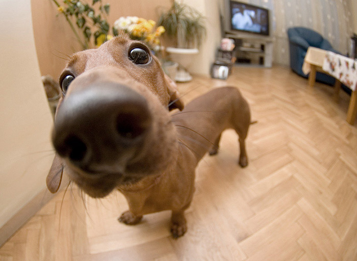 10+ Nosy Dogs Who Want To Know What You're Doing
