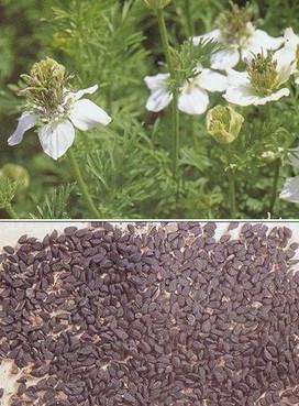 использование масла черного тмина для кожи