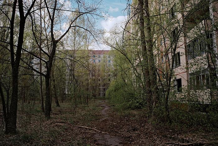 18 фото о том, что в Чернобыле природа взяла верх над цивилизацией