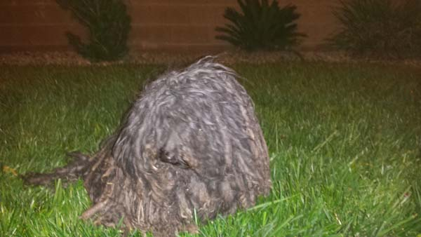 По дороге домой с работы, девушка заметила мешок для мусора бездомная, второй шанс, животные, собака