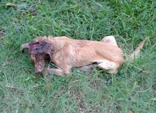 Когда этот мужчина увидел умирающего щенка, он поступил, как настоящий герой!