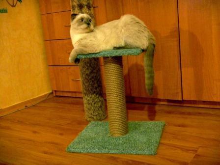 Когтеточка для кошки своими руками: схемы, устройство, изготовление — для разных пород и характеров