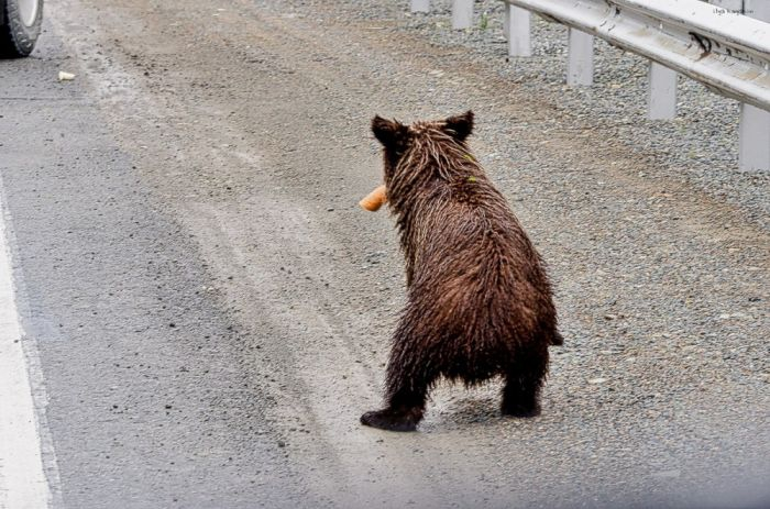Не кормите медведей! кормление, медведь, случай