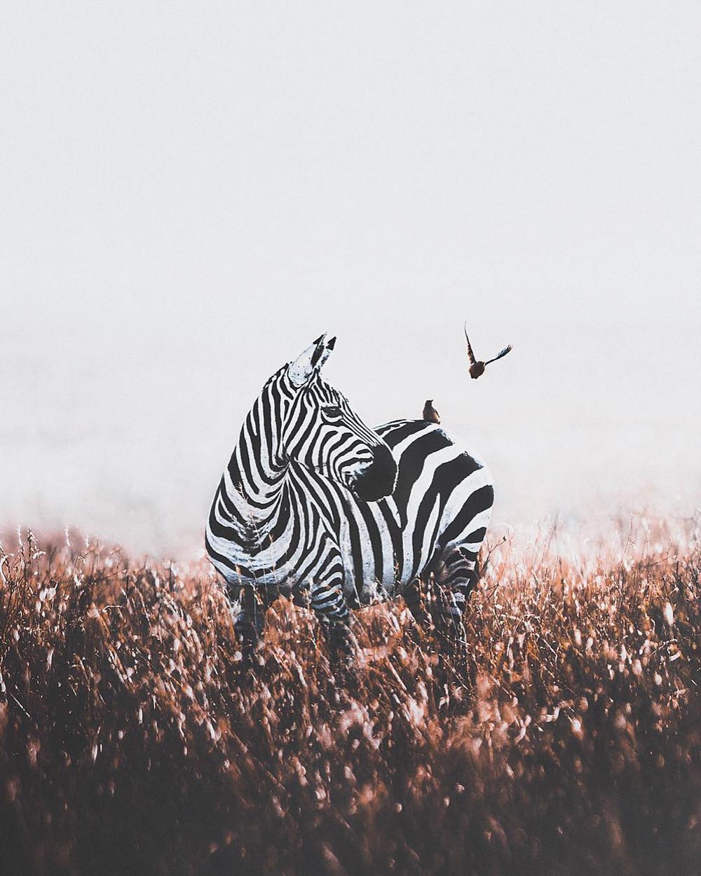Природа в объективе фотографа Донала Бойда (Donal Boyd)