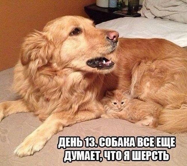 Кошки и собаки. Враги или друзья?