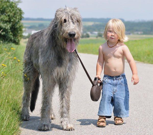 Маленькие дети со своими большими собаками (22 фото)