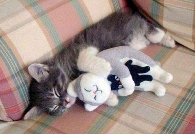lolcats10 100 лучших фотографий кошек всех времен и народов