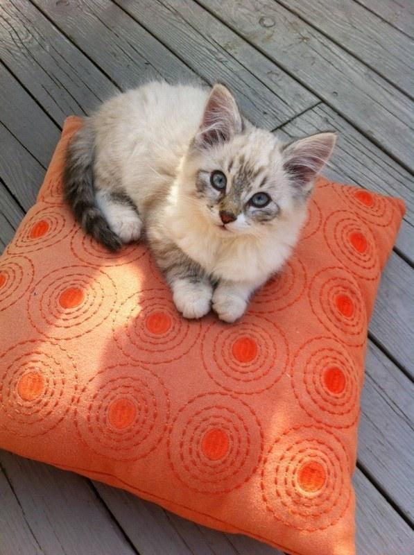 Самые милые котята в мире фото скачать бесплатно - ca