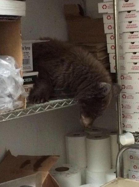 Голодный медвежонок уснул в пиццерии