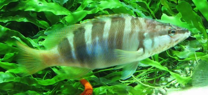 Рыбы, которых считали Богами