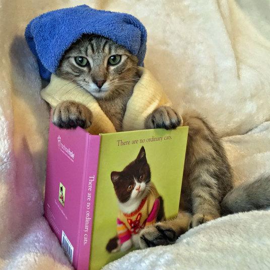 Коты, которые ведут себя как люди