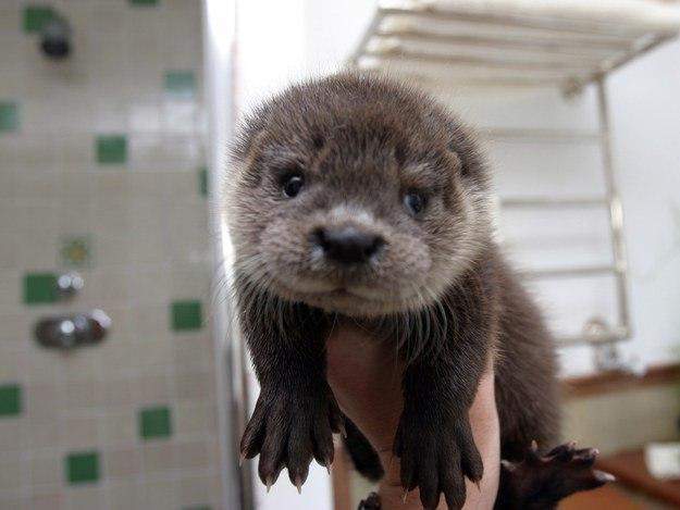 28 детенышей животных, которые напомнят вам, что мир прекрасен! детеныш, животные, милота, фото