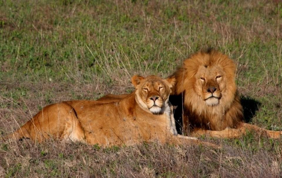 """Вокруг парка львов """"Тайган"""" полыхают страсти"""