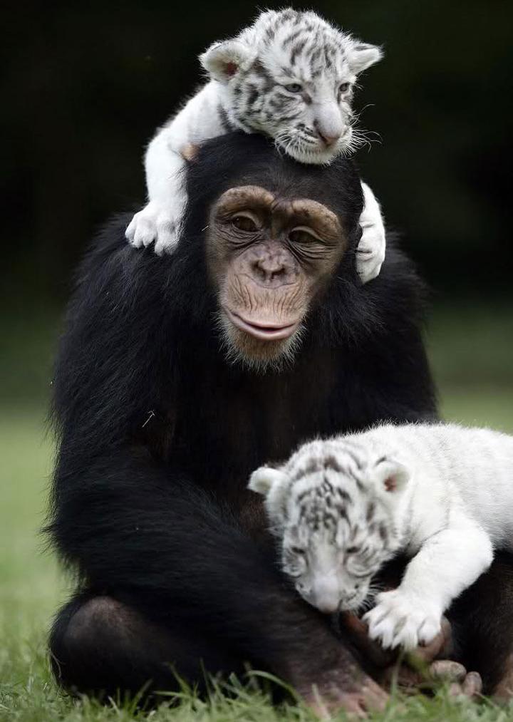 50 случаев удивительной дружбы животных дружба, животное