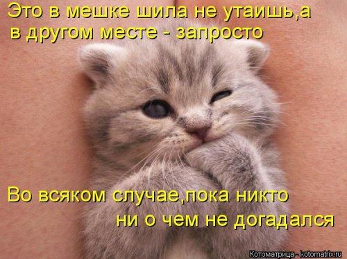 Новая котоматрица (29 фото)