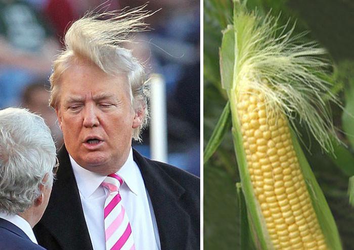 7. Дональд Трамп и этот початок кукурузы вещи, люди, похожие лица, схожесть