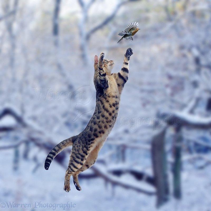 Котики от Warren Photographic