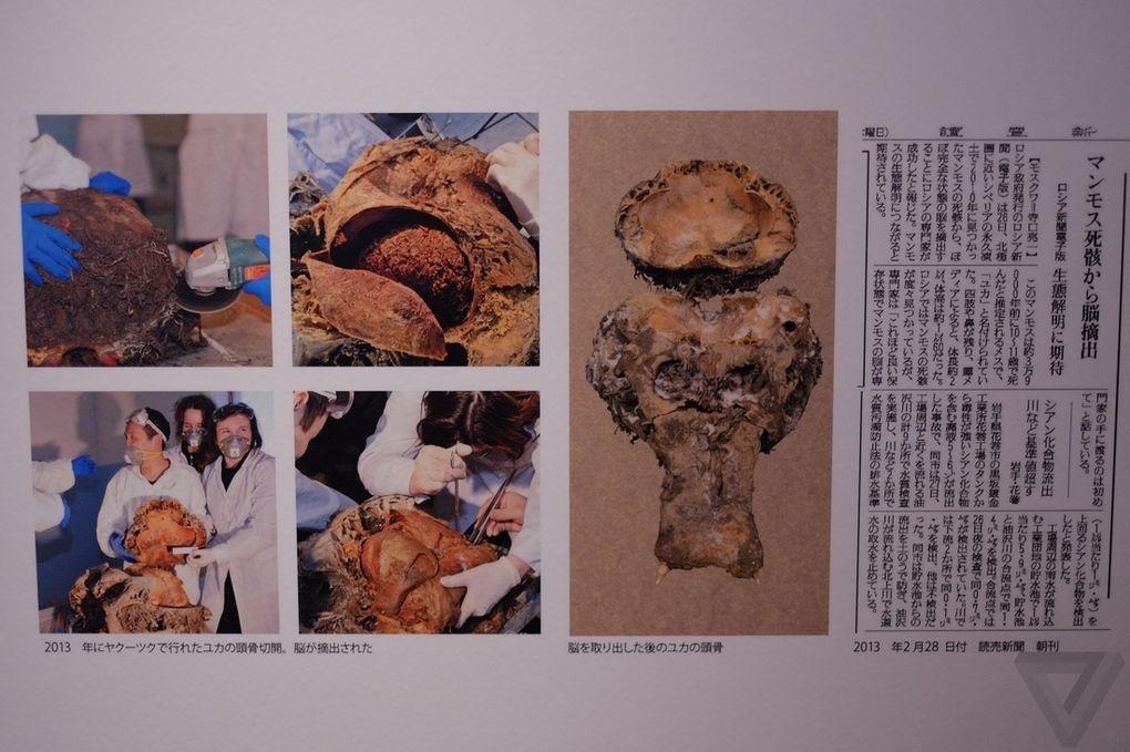 Yuka13 Самый известный мамонт из Якутии: Юка