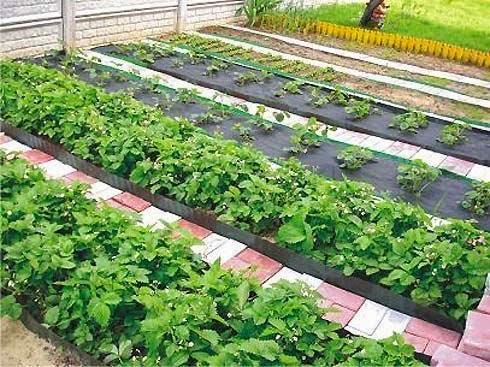 Секреты садоводу - огороднику