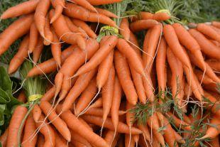 Девица в темнице. Чем полезна морковь