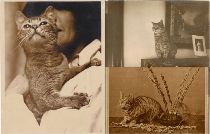 Кошки 20-х годов.