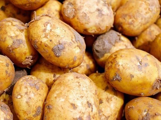 Роскачество проверило картошку: кадмий, парша, фомоз, гниль