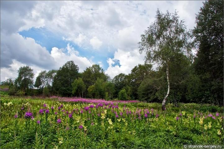 В путь к полевым цветам,травам луговым