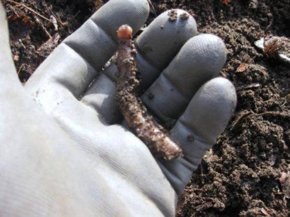 обогащение почвы: Органическое земледелие, пермакультура