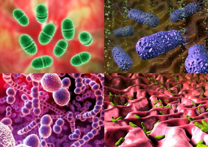 Почему бактерии нас победили? Четыре графика