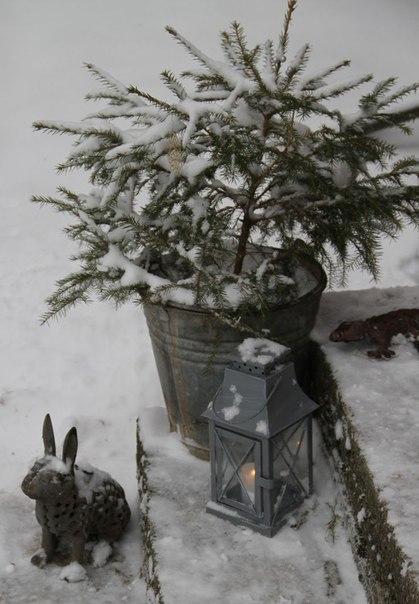 Зимние работы в саду: защищаем деревья и кустарники