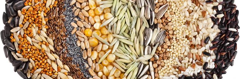 Полезные семена: 6 видов