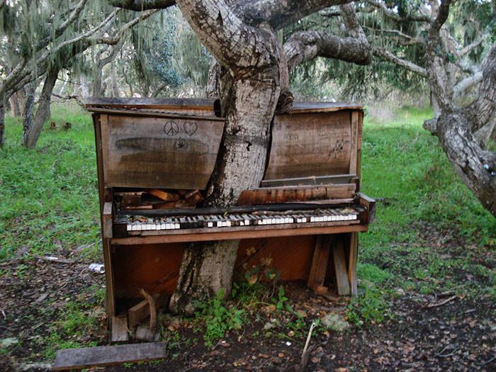 Из пианино дерево, живучесть, жизнь, мир, планета, растительность, фото