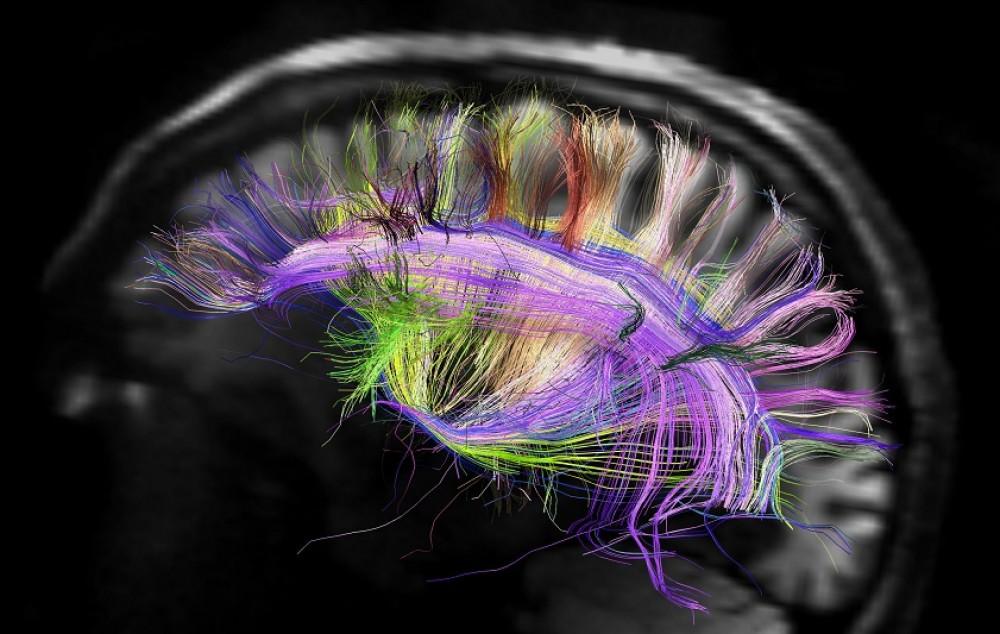 В каком отделе мозга находится душа?