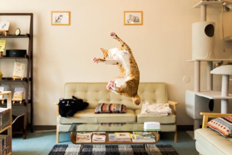 Смешная подборка прыжков кошек! животные, коты, прикол, юмор