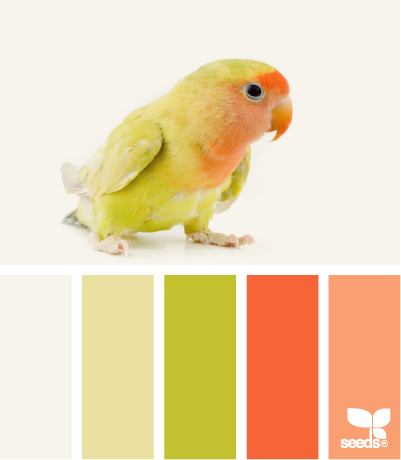 feathered color