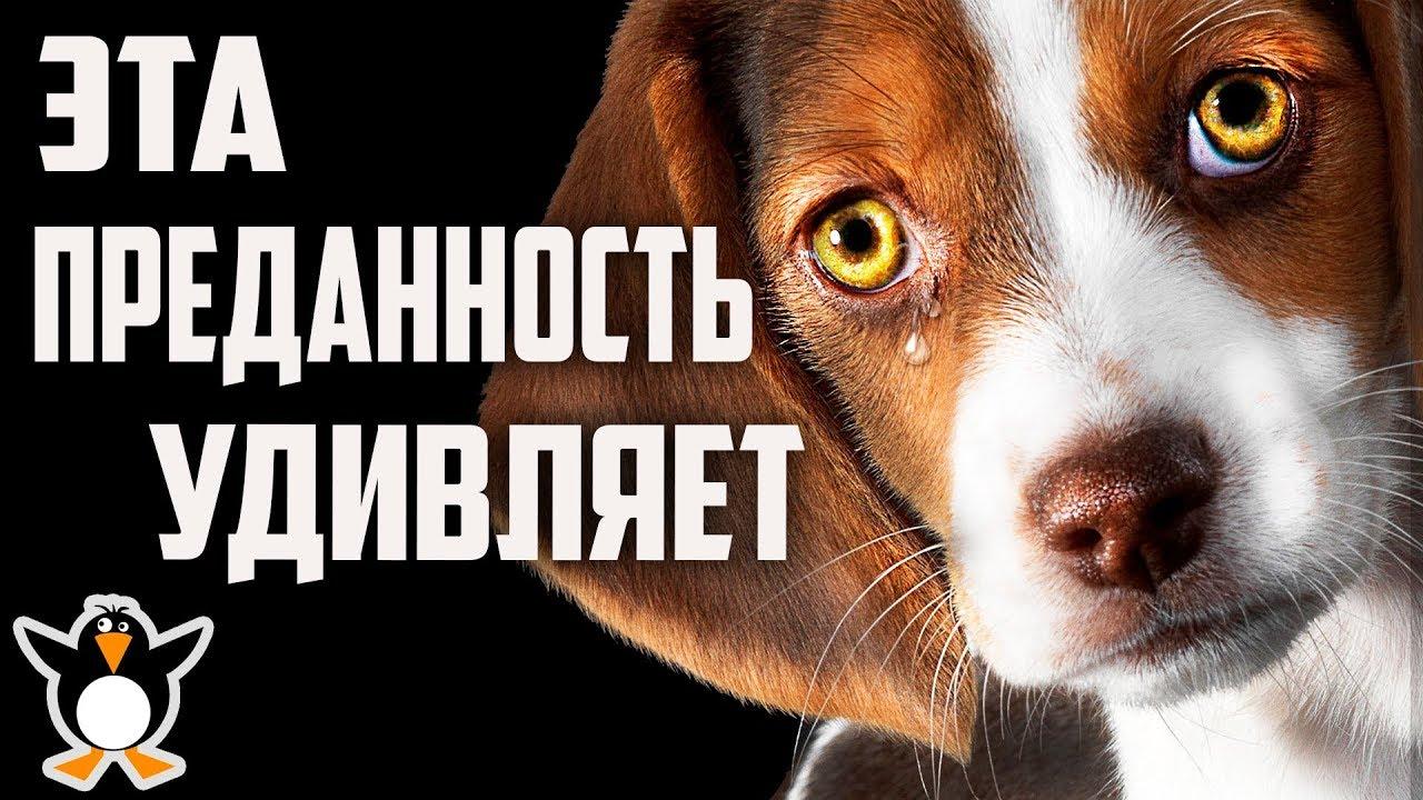 Собачья преданность не знает границ (трогательные истории)