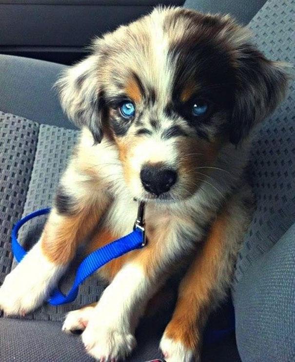 Cамые необычные породы собак