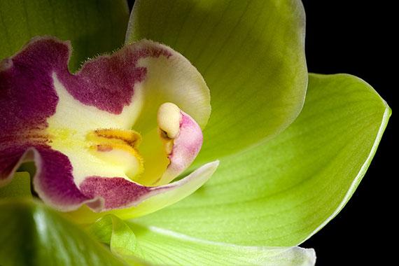 1-е место Самые дорогие цветы в мире