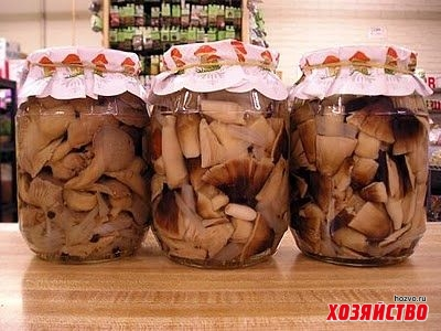 Как и сколько хранить белые грибы на зиму в домашних условиях правильно