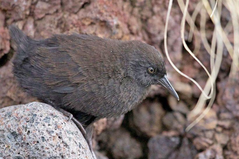 Исключение из правил: птицы нашей планеты, которые не умеют летать