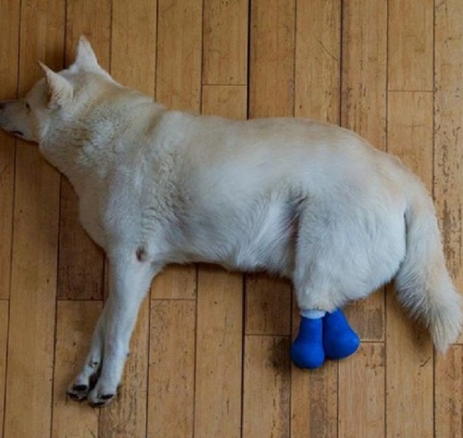 Казалось, что покалеченный живодерами пес останется сиротой навсегда. Но волонтеры не сдавались!