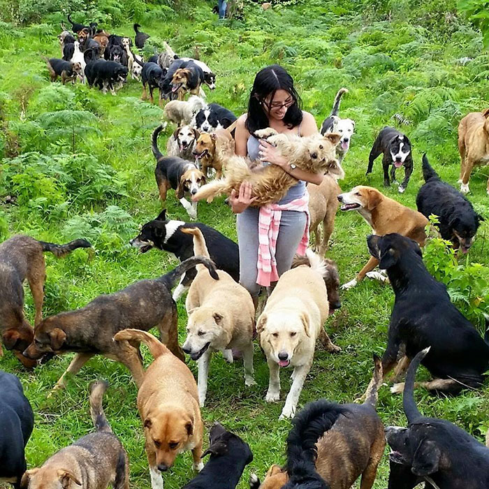 Land of the Strays in Costa Rica Is Heaven On Earth For Stray Dogs