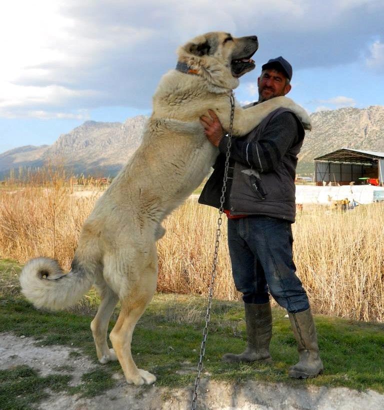 Собака шла по цене верблюда, но их отдавали бесплатно...