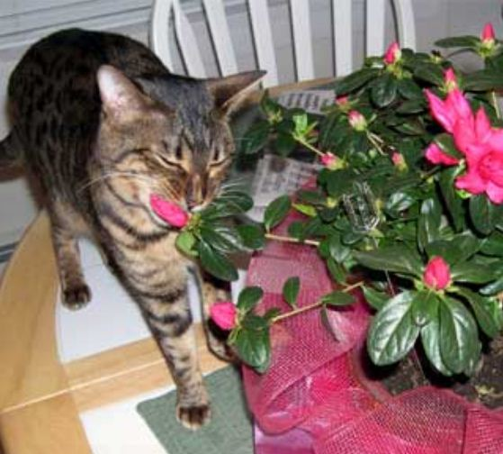 какую кошку цветом лучше держать дома
