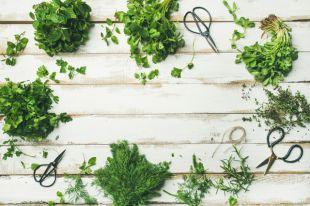 Первые витамины. Что приготовить из весенней зелени?