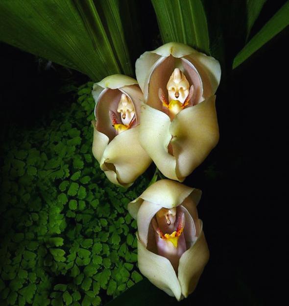 17 цветов, которые выглядят как нечто иное