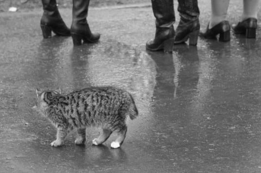А это кот в руках от счастья…