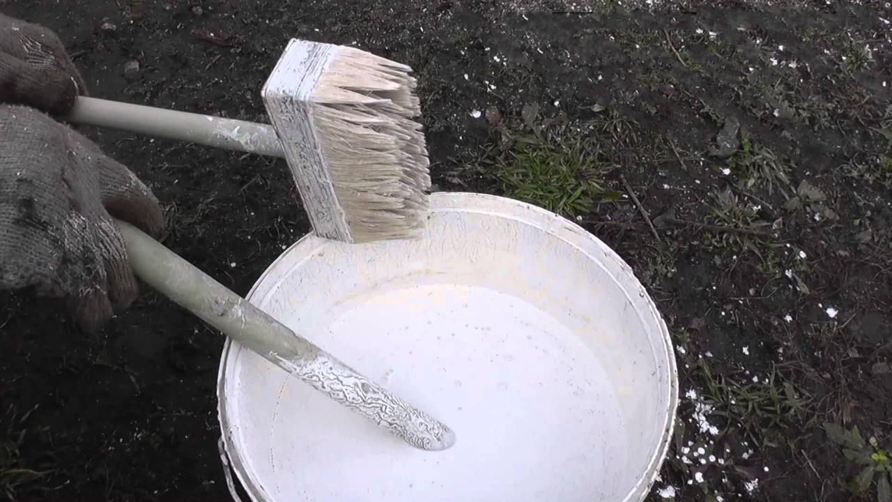 Как приготовить побелка деревьев