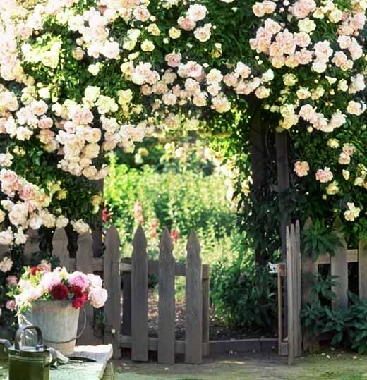 арки из плетущихся роз у калитки